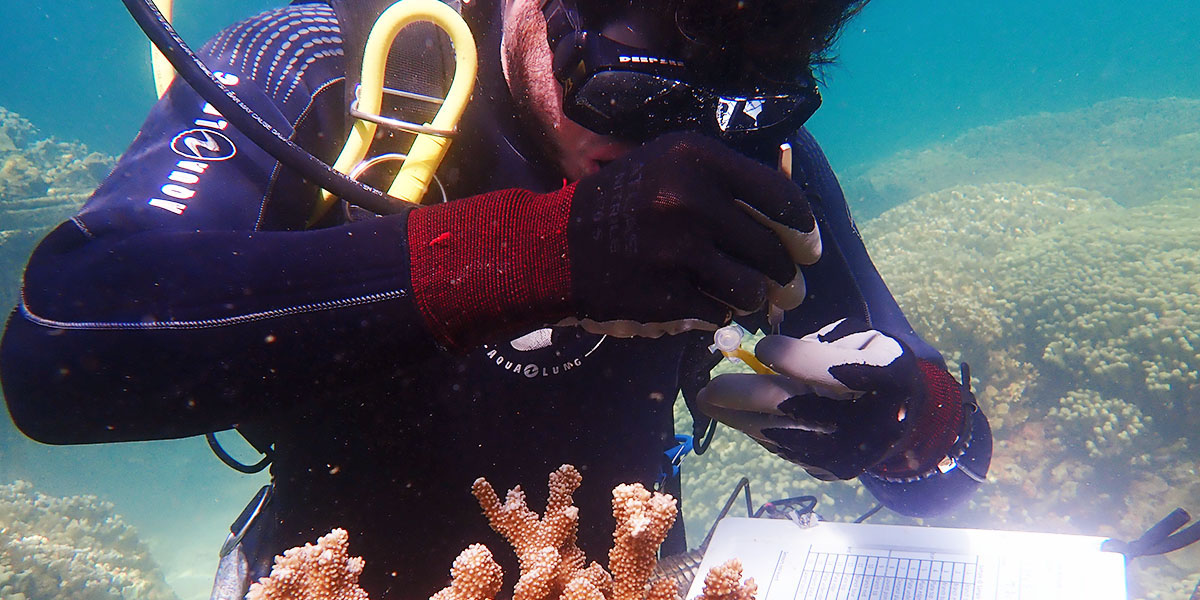 Shayle Matsuda in scuba gear underwater